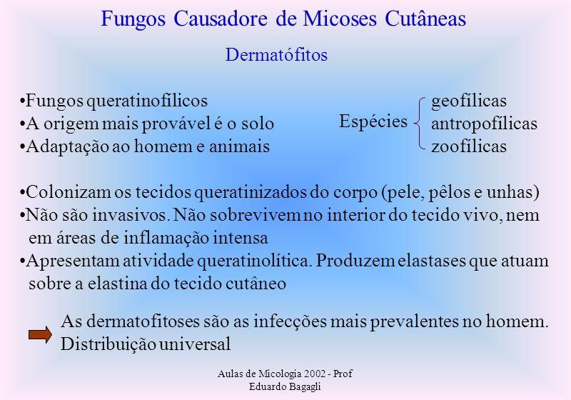 Aulas de Micologia 2002 - Prof Eduardo Bagagli Fungos Causadore de Micoses Cutâneas Dermatófitos Fungos queratinofílicos A origem mais provável é o so