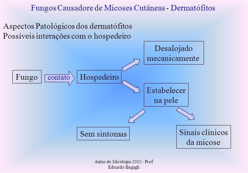Aulas de Micologia 2002 - Prof Eduardo Bagagli Fungos Causadore de Micoses Cutâneas - Dermatófitos Aspectos Patológicos dos dermatófitos Possíveis int