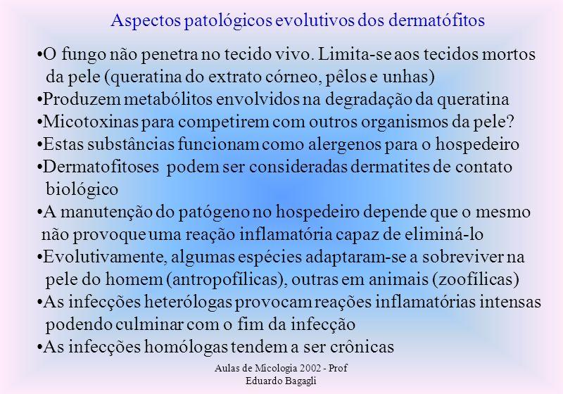 Aulas de Micologia 2002 - Prof Eduardo Bagagli Aspectos patológicos evolutivos dos dermatófitos O fungo não penetra no tecido vivo. Limita-se aos teci