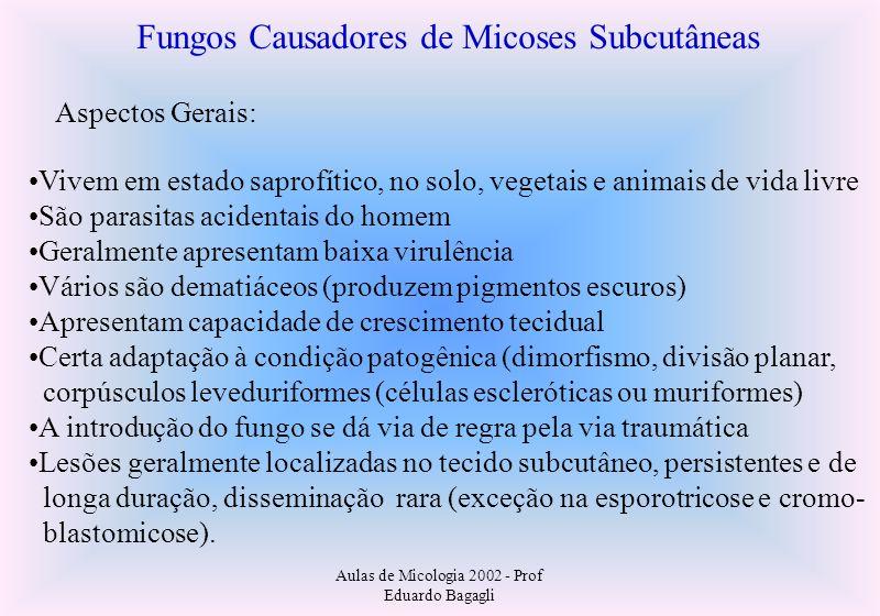 Aulas de Micologia 2002 - Prof Eduardo Bagagli Fungos Causadores de Micoses Subcutâneas Aspectos Gerais: Vivem em estado saprofítico, no solo, vegetai
