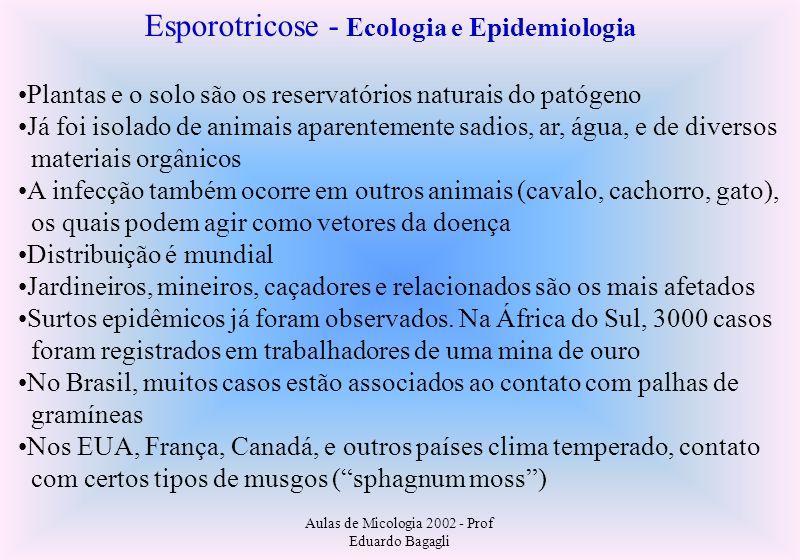 Aulas de Micologia 2002 - Prof Eduardo Bagagli Esporotricose - Ecologia e Epidemiologia Plantas e o solo são os reservatórios naturais do patógeno Já