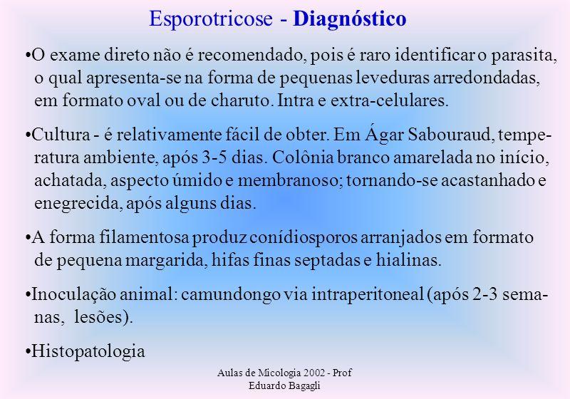 Aulas de Micologia 2002 - Prof Eduardo Bagagli Esporotricose - Diagnóstico O exame direto não é recomendado, pois é raro identificar o parasita, o qua