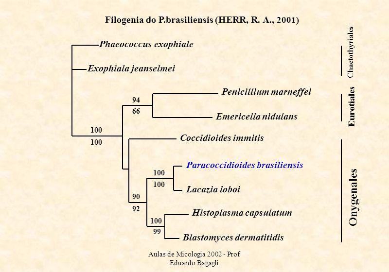 Aulas de Micologia 2002 - Prof Eduardo Bagagli 94 66 100 Histoplasma capsulatum Blastomyces dermatitidis Penicillium marneffei Emericella nidulans Pha