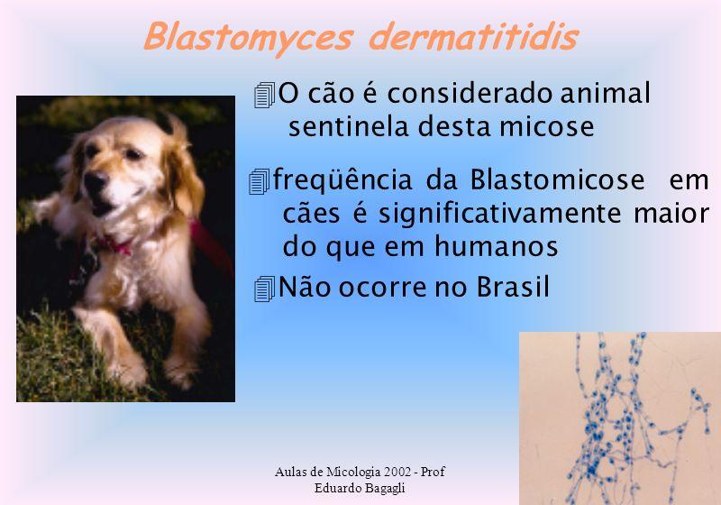 Aulas de Micologia 2002 - Prof Eduardo Bagagli Blastomyces dermatitidis O cão é considerado animal sentinela desta micose freqüência da Blastomicose e