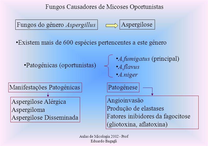 Aulas de Micologia 2002 - Prof Eduardo Bagagli Fungos Causadores de Micoses Oportunistas Fungos do gênero Aspergillus Aspergilose Existem mais de 600