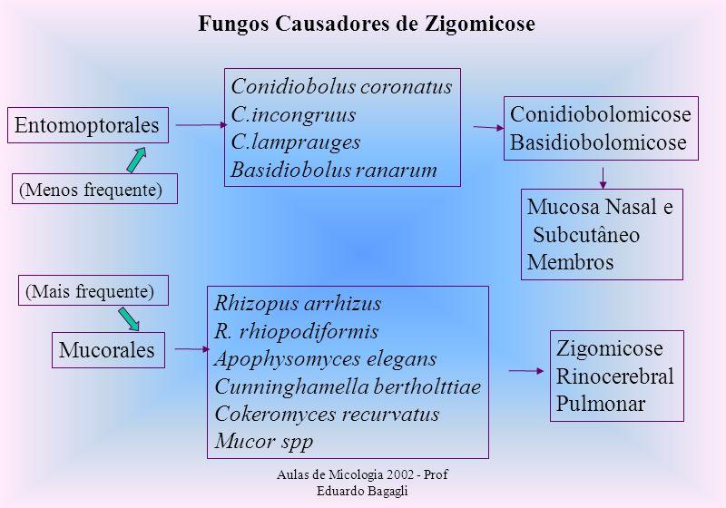 Aulas de Micologia 2002 - Prof Eduardo Bagagli Fungos Causadores de Zigomicose Entomoptorales Conidiobolus coronatus C.incongruus C.lamprauges Basidio