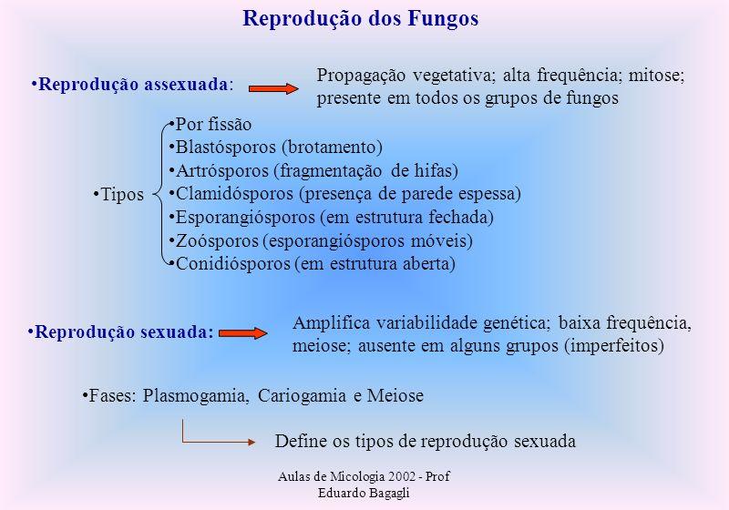 Aulas de Micologia 2002 - Prof Eduardo Bagagli Parassexualidade: Núcleo celular fúngico: Cromossomos pequenos, organizados em nucleossomos Estado haplóide é mais frequente Carioteca mantém-se íntegra na divisão celular Presença de centríolos ou corpúsculo polar do fuso Fenômeno da heterocariose (núcleos geneticamente #s em um mesmo indivíduo) Amplifica a variabilidade genética sem meiose; baixas frequências Etapas: Heterocariose Cariogamia Haploidização por aneuploidias (perdas cromossômicas) Ocorrência de permutas cromossômicas