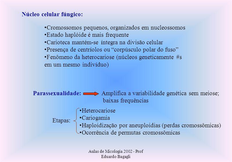 Aulas de Micologia 2002 - Prof Eduardo Bagagli Parassexualidade: Núcleo celular fúngico: Cromossomos pequenos, organizados em nucleossomos Estado hapl