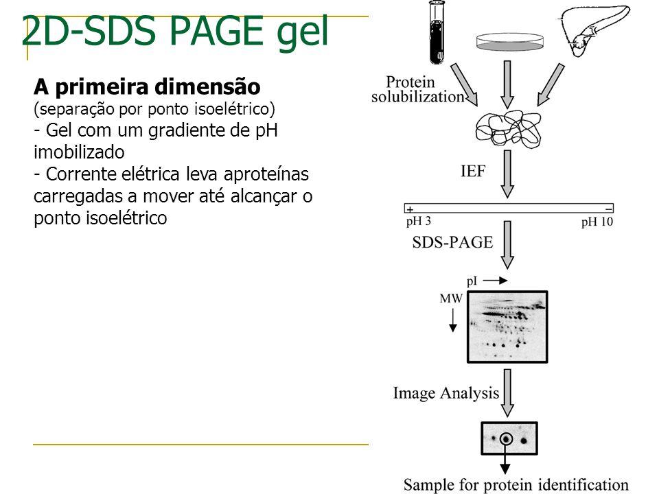 Background experimental Eletroforese 2D Método para separação e visualização de proteínas SEparação por carga e massa Espectometria de Massa Análise d