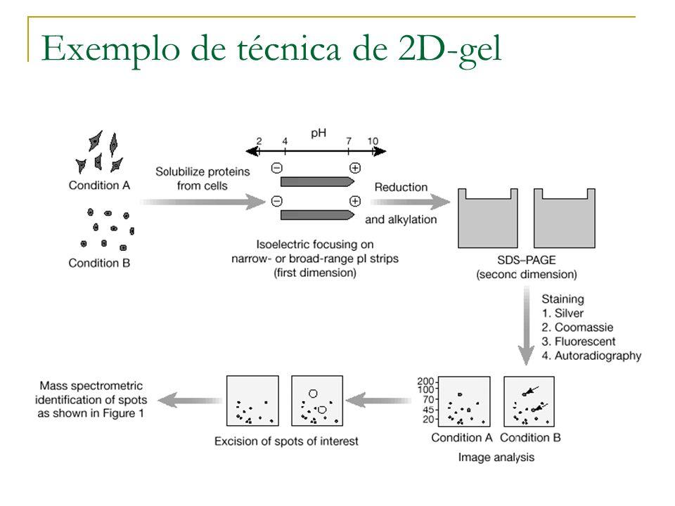 2D-SDS PAGE gel