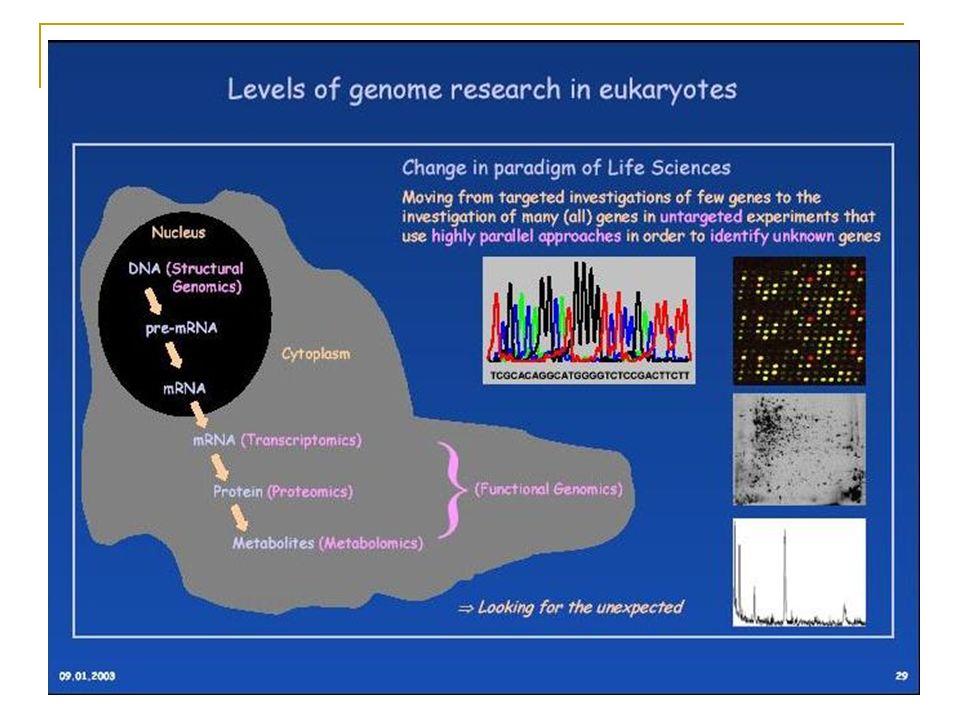 Genômica DNA (Gene) Genômica Funcional TranscriptômicaRNA Proteômica PROTEÍNA Metabolômica METABOLITE Transcrição Tradução Reação enzimática A nomencl
