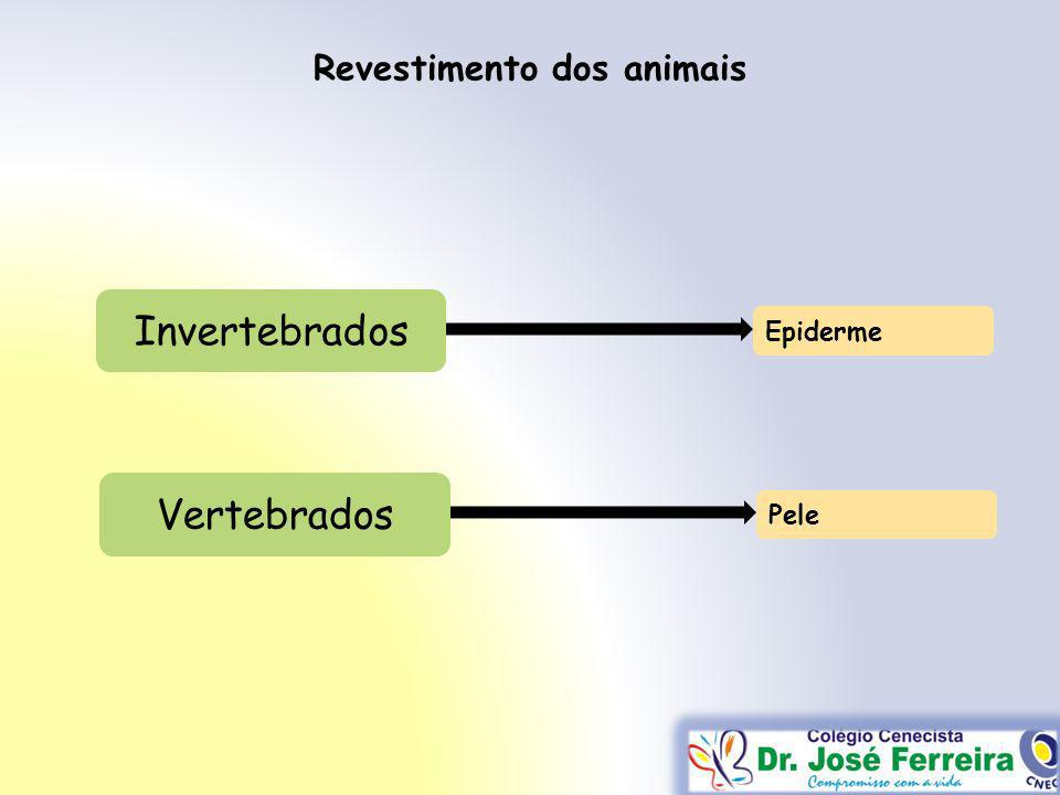 Revestimento dos animais Invertebrados Epiderme Vertebrados Pele