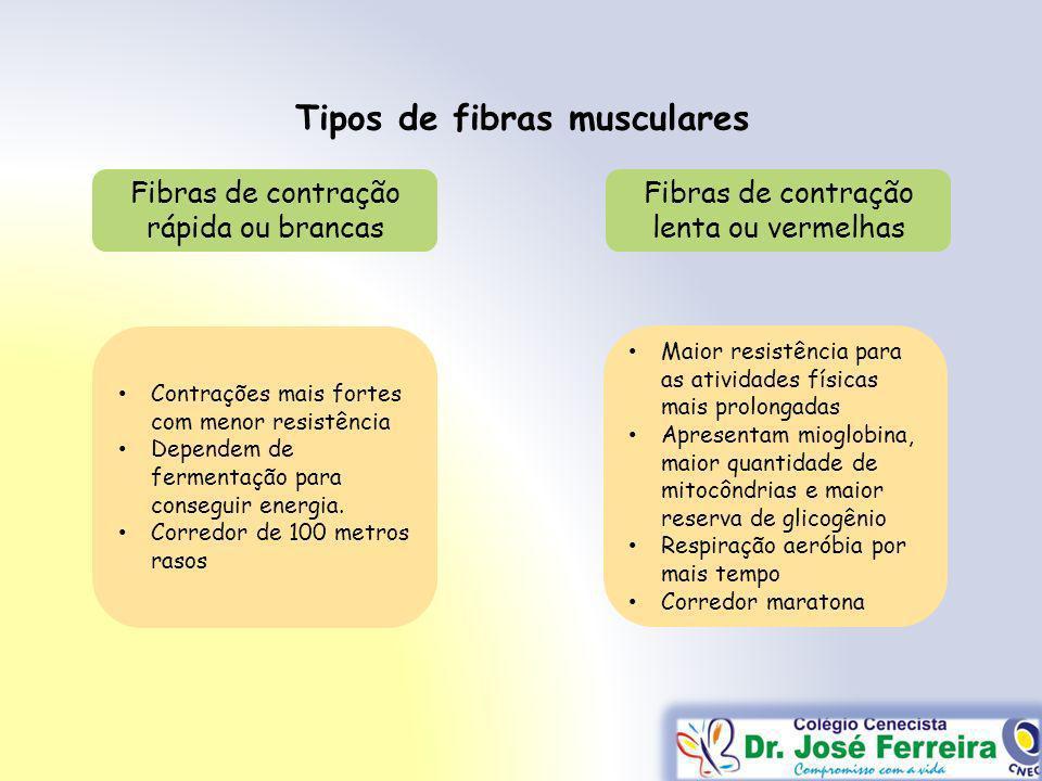 Tipos de fibras musculares Contrações mais fortes com menor resistência Dependem de fermentação para conseguir energia. Corredor de 100 metros rasos F