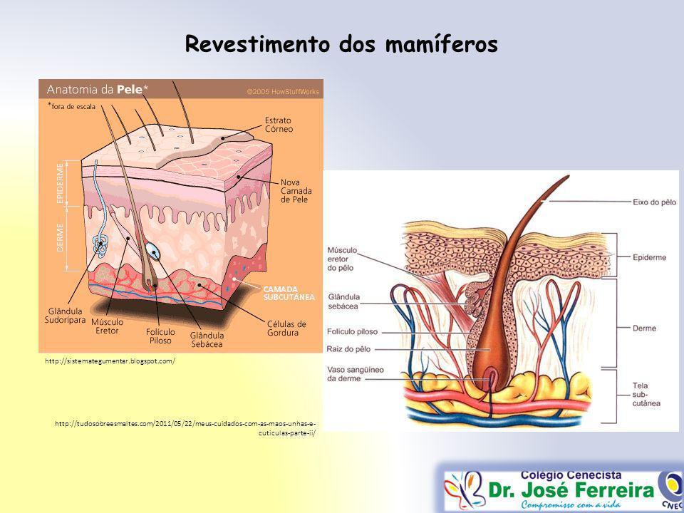 Revestimento dos mamíferos http://sistemategumentar.blogspot.com/ http://tudosobreesmaltes.com/2011/05/22/meus-cuidados-com-as-maos-unhas-e- cuticulas