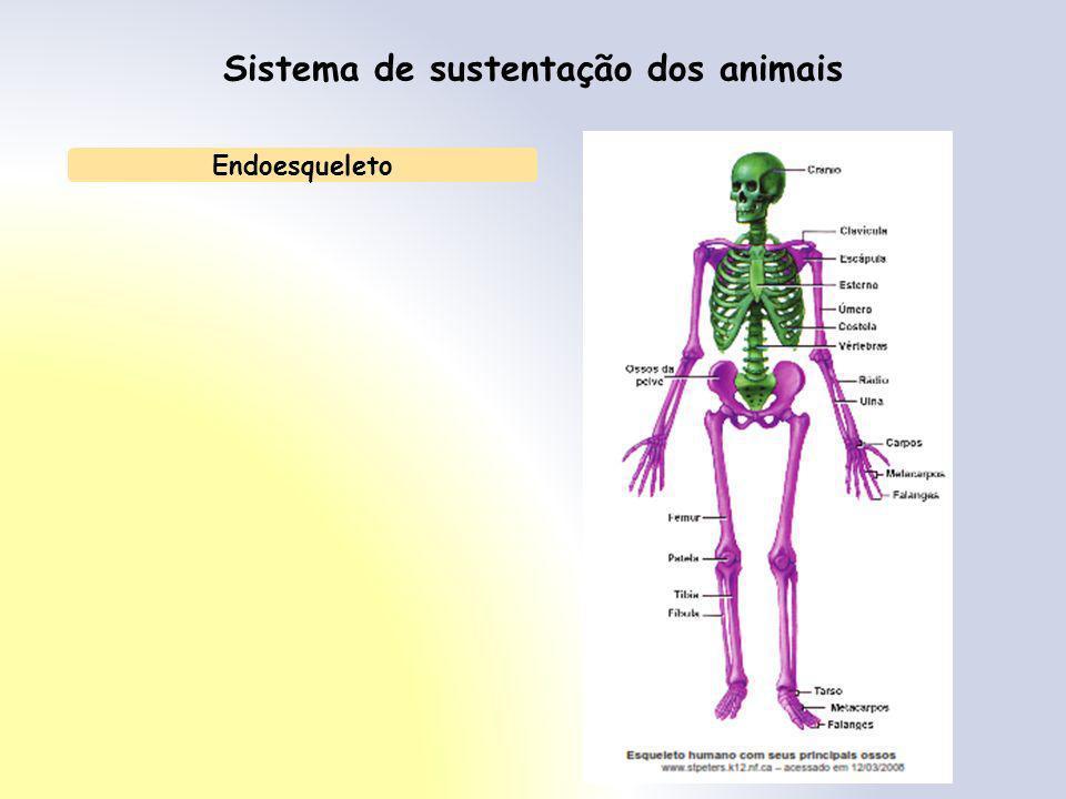 Sistema de sustentação dos animais Endoesqueleto
