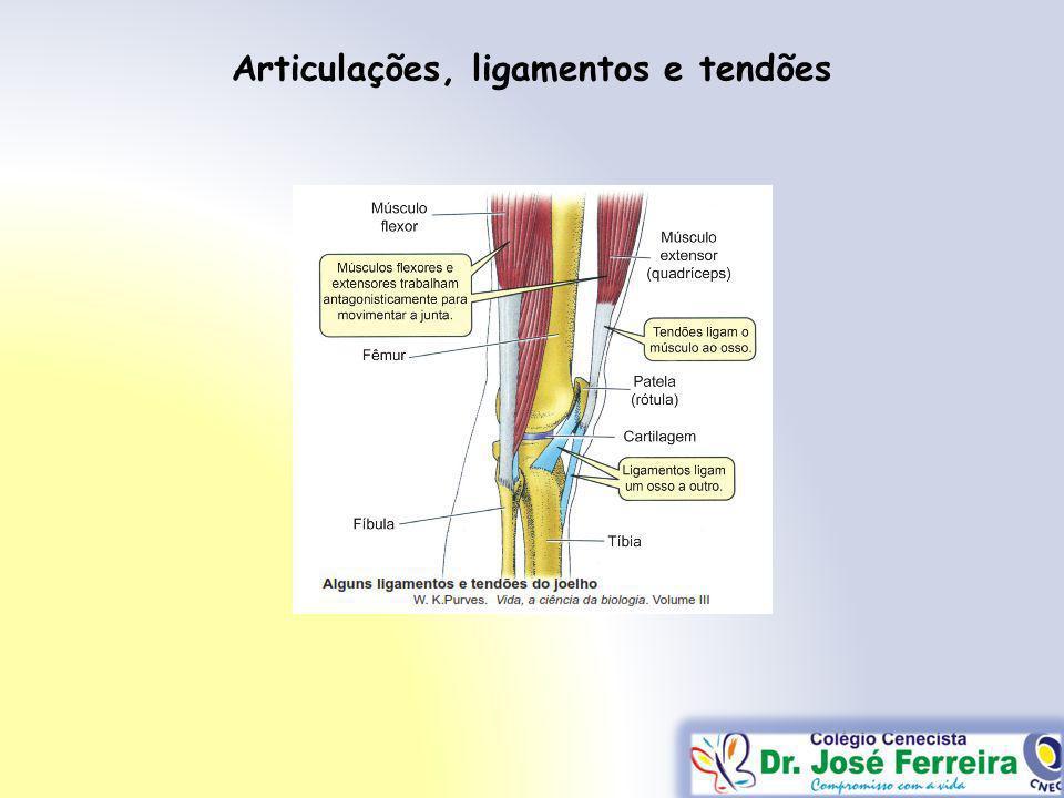 Articulações, ligamentos e tendões