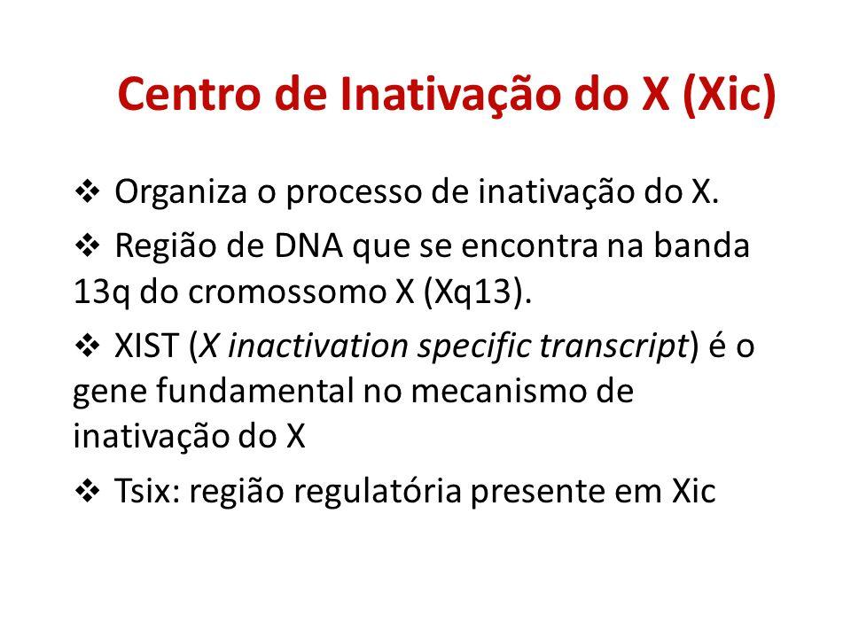 Centro de Inativação do X (Xic) Organiza o processo de inativação do X. Região de DNA que se encontra na banda 13q do cromossomo X (Xq13). XIST (X ina