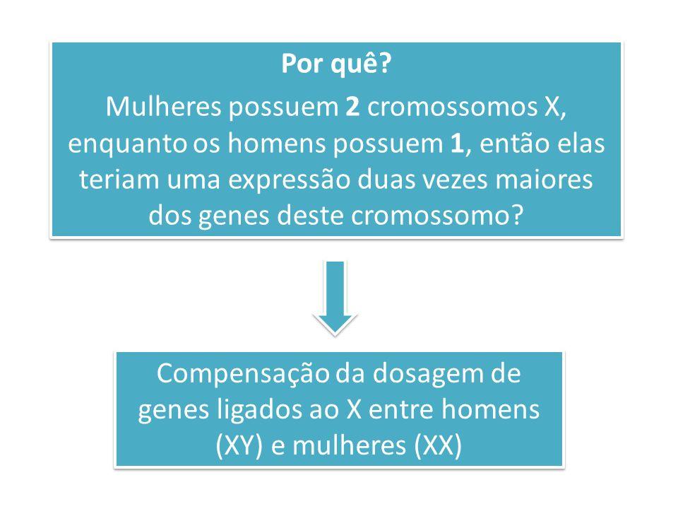 Por quê? Mulheres possuem 2 cromossomos X, enquanto os homens possuem 1, então elas teriam uma expressão duas vezes maiores dos genes deste cromossomo