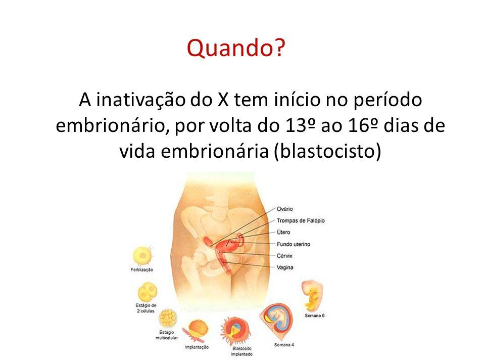 Quando? A inativação do X tem início no período embrionário, por volta do 13º ao 16º dias de vida embrionária (blastocisto)
