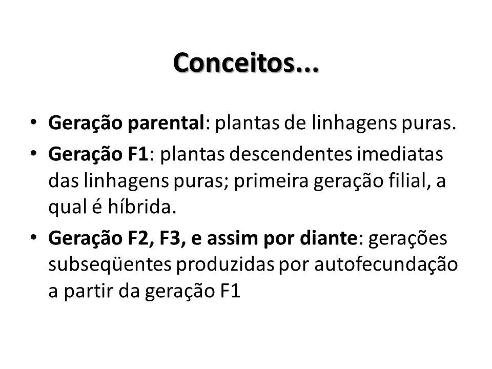 Conceitos... Geração parental: plantas de linhagens puras. Geração F1: plantas descendentes imediatas das linhagens puras; primeira geração filial, a