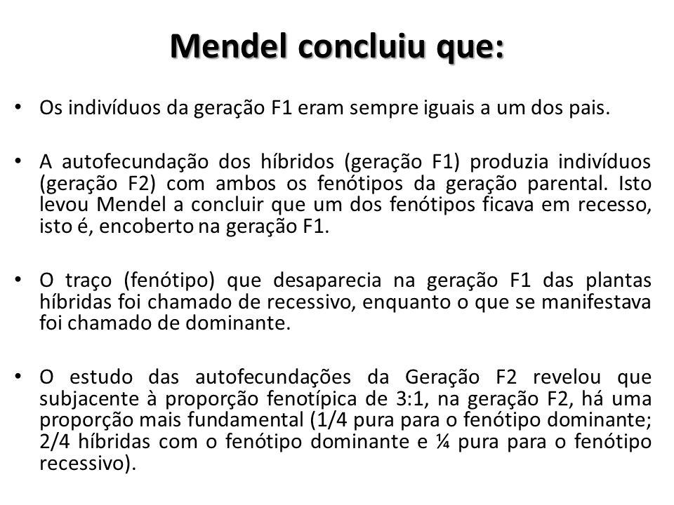 Mendel concluiu que: Os indivíduos da geração F1 eram sempre iguais a um dos pais. A autofecundação dos híbridos (geração F1) produzia indivíduos (ger