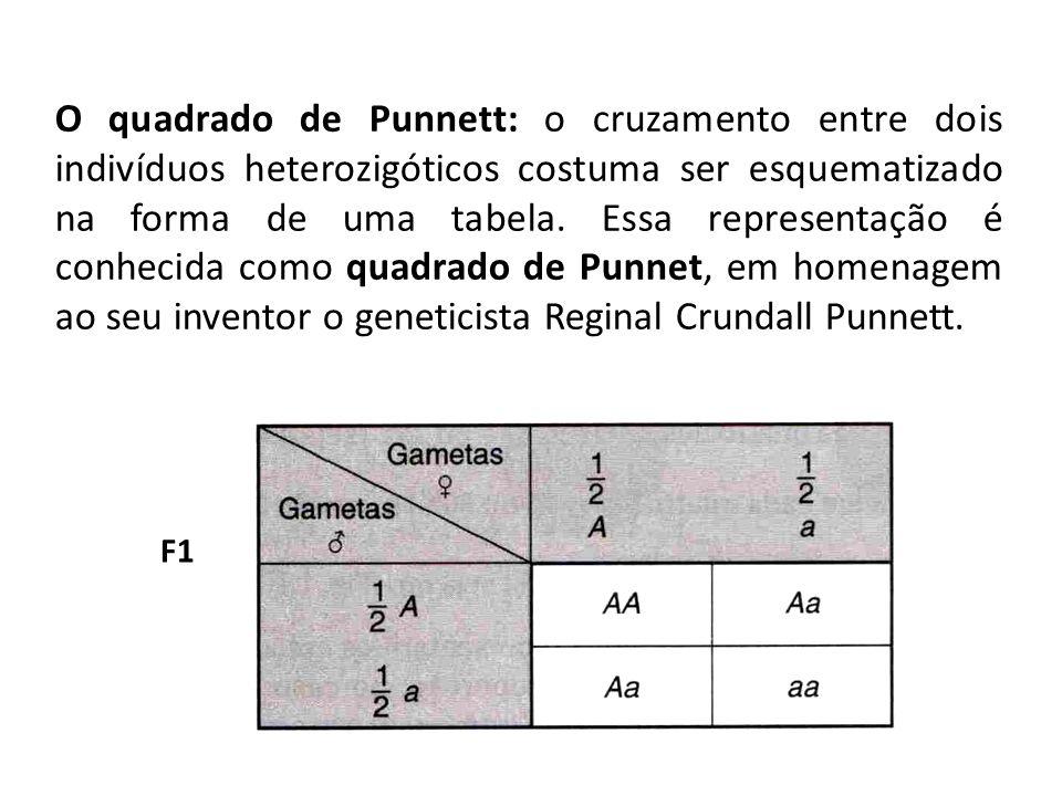 F1 O quadrado de Punnett: o cruzamento entre dois indivíduos heterozigóticos costuma ser esquematizado na forma de uma tabela. Essa representação é co
