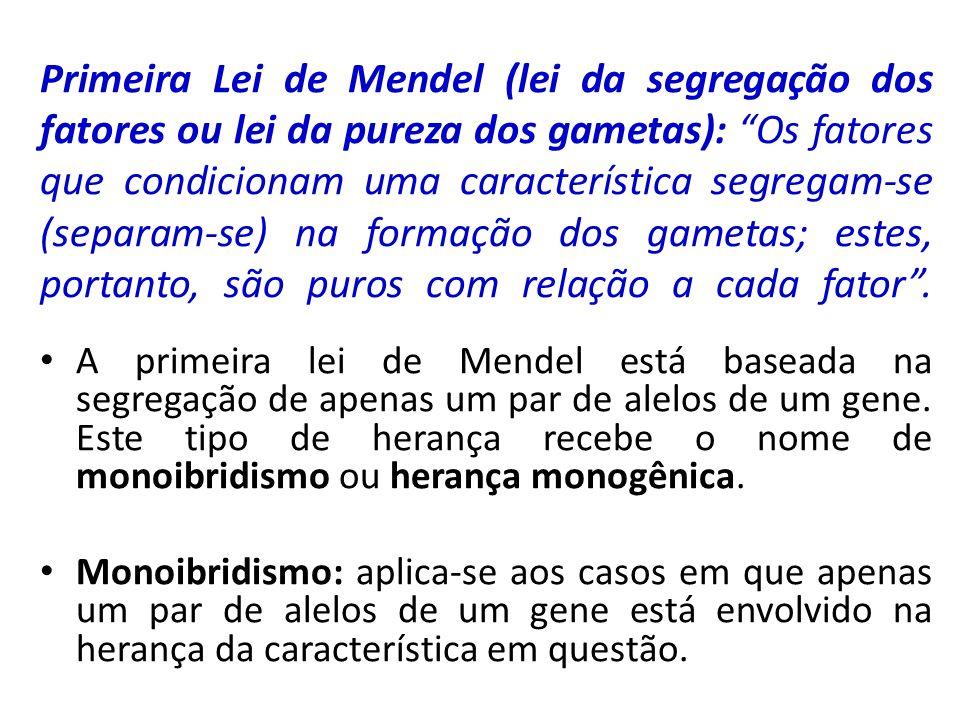 Primeira Lei de Mendel (lei da segregação dos fatores ou lei da pureza dos gametas): Os fatores que condicionam uma característica segregam-se (separa