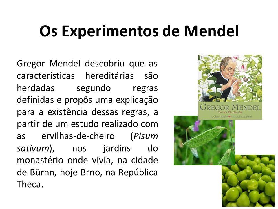 Os Experimentos de Mendel Gregor Mendel descobriu que as características hereditárias são herdadas segundo regras definidas e propôs uma explicação pa