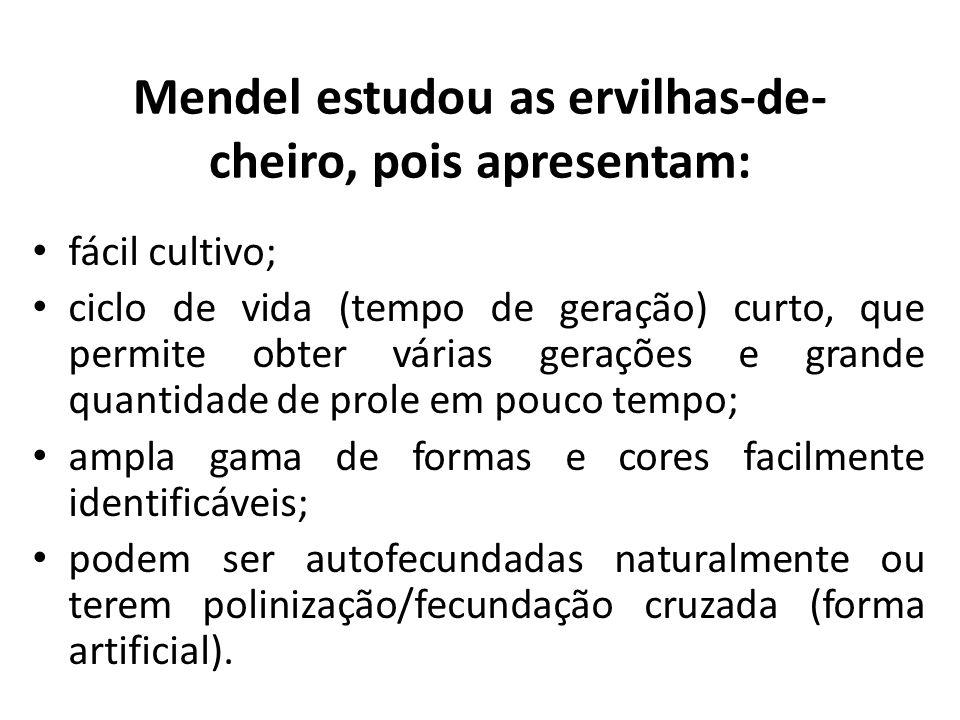 Mendel estudou as ervilhas-de- cheiro, pois apresentam: fácil cultivo; ciclo de vida (tempo de geração) curto, que permite obter várias gerações e gra