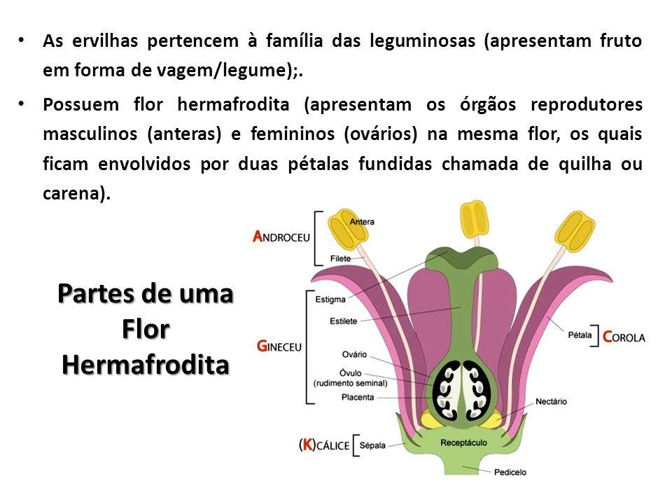 As ervilhas pertencem à família das leguminosas (apresentam fruto em forma de vagem/legume);. Possuem flor hermafrodita (apresentam os órgãos reprodut