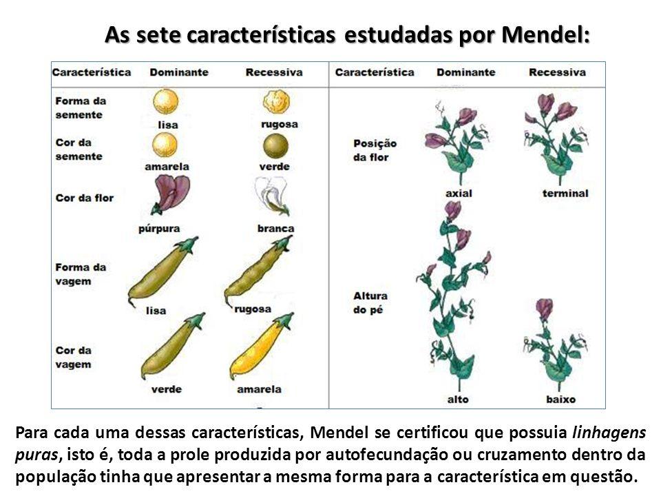 As sete características estudadas por Mendel: Para cada uma dessas características, Mendel se certificou que possuia linhagens puras, isto é, toda a p