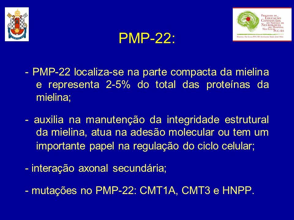 PMP-22: - PMP-22 localiza-se na parte compacta da mielina e representa 2-5% do total das proteínas da mielina; - auxilia na manutenção da integridade