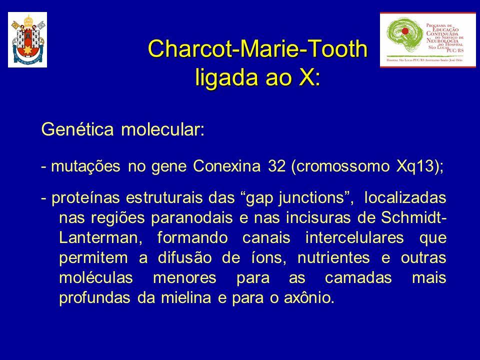 Genética molecular: - mutações no gene Conexina 32 (cromossomo Xq13); - proteínas estruturais das gap junctions, localizadas nas regiões paranodais e