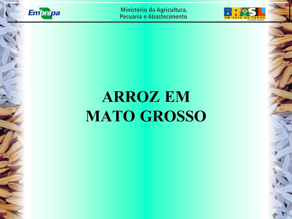 NÃO INOVAÇÕES + MENOR ESFORÇO TECNOLÓGICO = PERDA DE COMPETITIVIDADE AMEAÇAS: RASTREABILIDADE, GARANTIA DE ORIGEM E OUTRAS SUGESTÃO ( MARKETING - CRIATIVIDADE : FORTALECIMENTO DA MARCA ARROZ DE MATO GROSSO