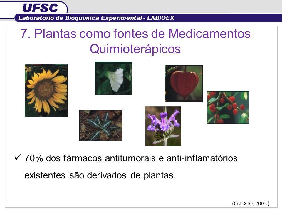 7. Plantas como fontes de Medicamentos Quimioterápicos 70% dos fármacos antitumorais e anti-inflamatórios existentes são derivados de plantas. (CALIXT