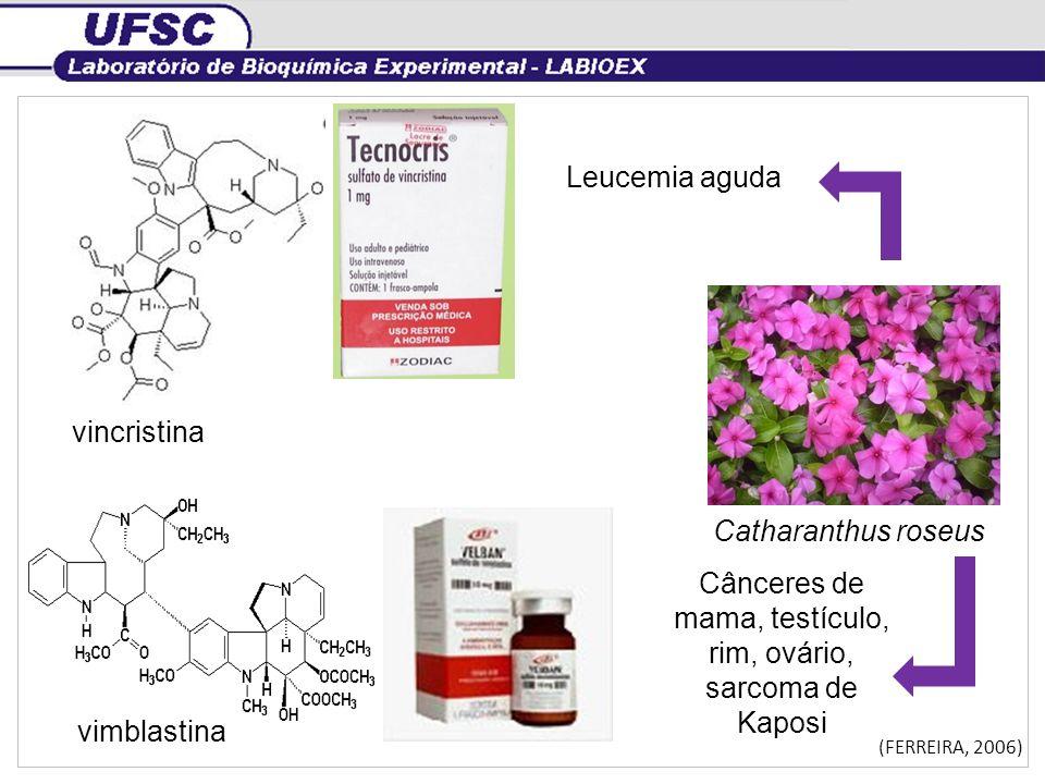 Catharanthus roseus vincristina vimblastina Leucemia aguda Cânceres de mama, testículo, rim, ovário, sarcoma de Kaposi (FERREIRA, 2006)