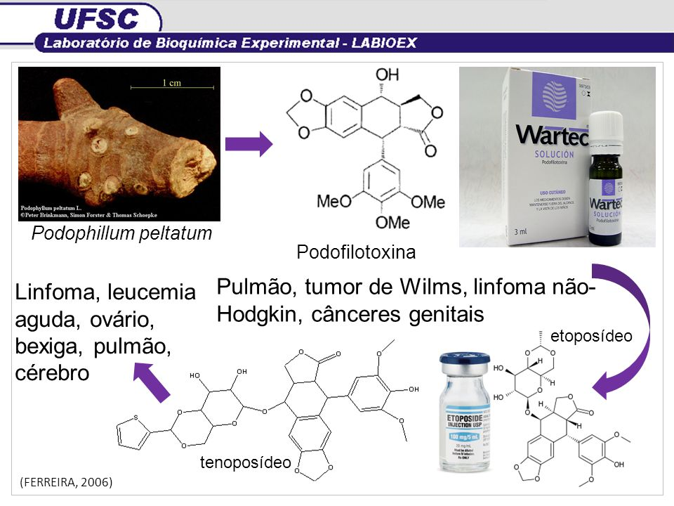 Podophillum peltatum Podofilotoxina Pulmão, tumor de Wilms, linfoma não- Hodgkin, cânceres genitais etoposídeo tenoposídeo Linfoma, leucemia aguda, ov