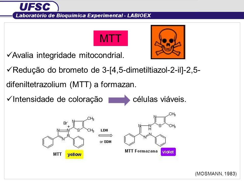 MTT Avalia integridade mitocondrial. Redução do brometo de 3-[4,5-dimetiltiazol-2-il]-2,5- difeniltetrazolium (MTT) a formazan. Intensidade de coloraç