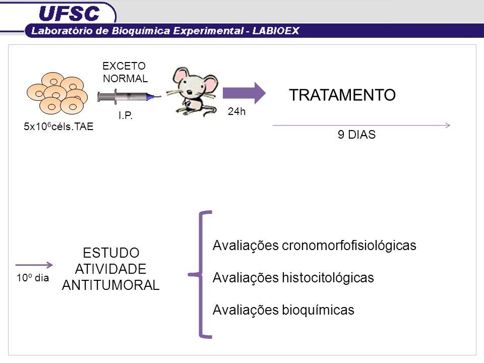5x10 6 céls.TAE I.P. EXCETO NORMAL 24h TRATAMENTO 9 DIAS 10º dia ESTUDO ATIVIDADE ANTITUMORAL { Avaliações cronomorfofisiológicas Avaliações histocito