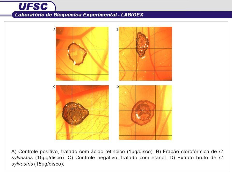 A) Controle positivo, tratado com ácido retinóico (1µg/disco). B) Fração clorofórmica de C. sylvestris (15µg/disco). C) Controle negativo, tratado com