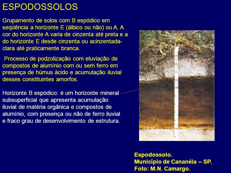 ESPODOSSOLOS Espodossolo. Município de Cananéia – SP. Foto: M.N. Camargo. Grupamento de solos com B espódico em seqüência a horizonte E (álbico ou não