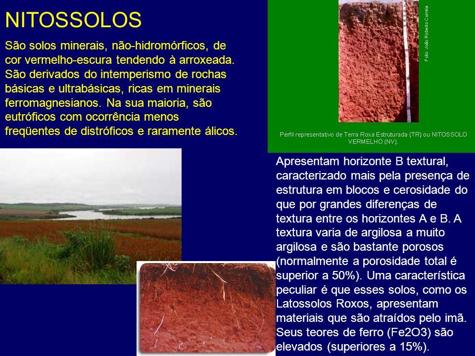 NITOSSOLOS São solos minerais, não-hidromórficos, de cor vermelho-escura tendendo à arroxeada. São derivados do intemperismo de rochas básicas e ultra