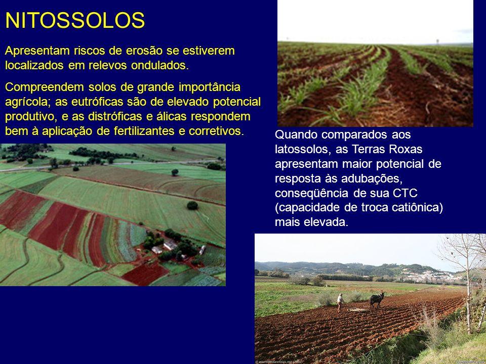 NITOSSOLOS Apresentam riscos de erosão se estiverem localizados em relevos ondulados. Compreendem solos de grande importância agrícola; as eutróficas