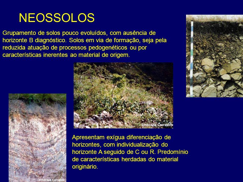 NEOSSOLOS Grupamento de solos pouco evoluídos, com ausência de horizonte B diagnóstico. Solos em via de formação, seja pela reduzida atuação de proces