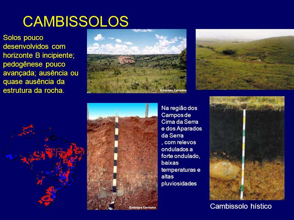 CAMBISSOLOS Cambissolo hístico Na região dos Campos de Cima da Serra e dos Aparados da Serra, com relevos ondulados a forte ondulado, baixas temperatu