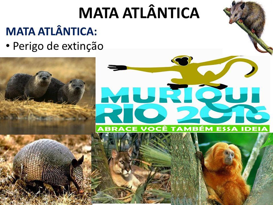 MATA ATLÂNTICA MATA ATLÂNTICA: Perigo de extinção