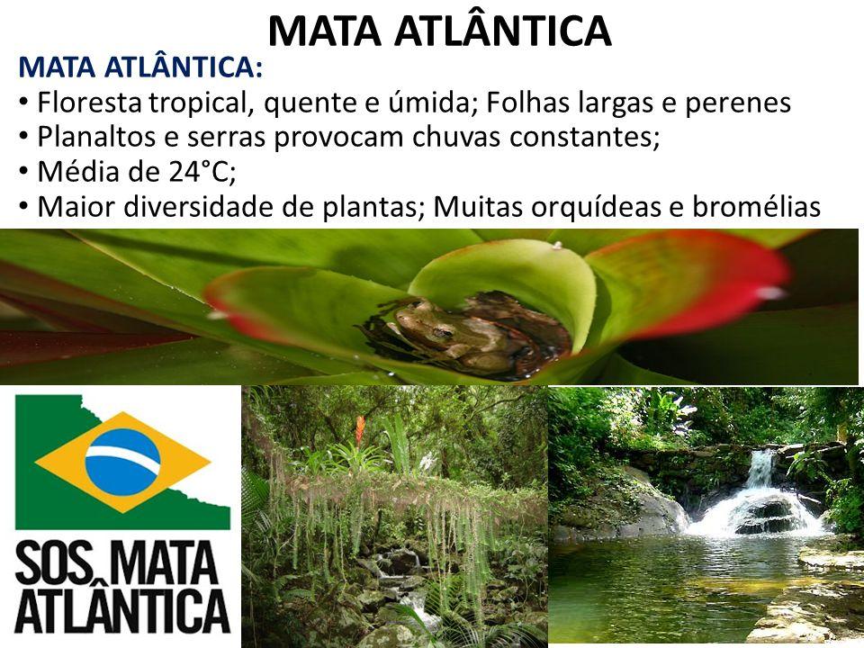 MATA ATLÂNTICA MATA ATLÂNTICA: Floresta tropical, quente e úmida; Folhas largas e perenes Planaltos e serras provocam chuvas constantes; Média de 24°C