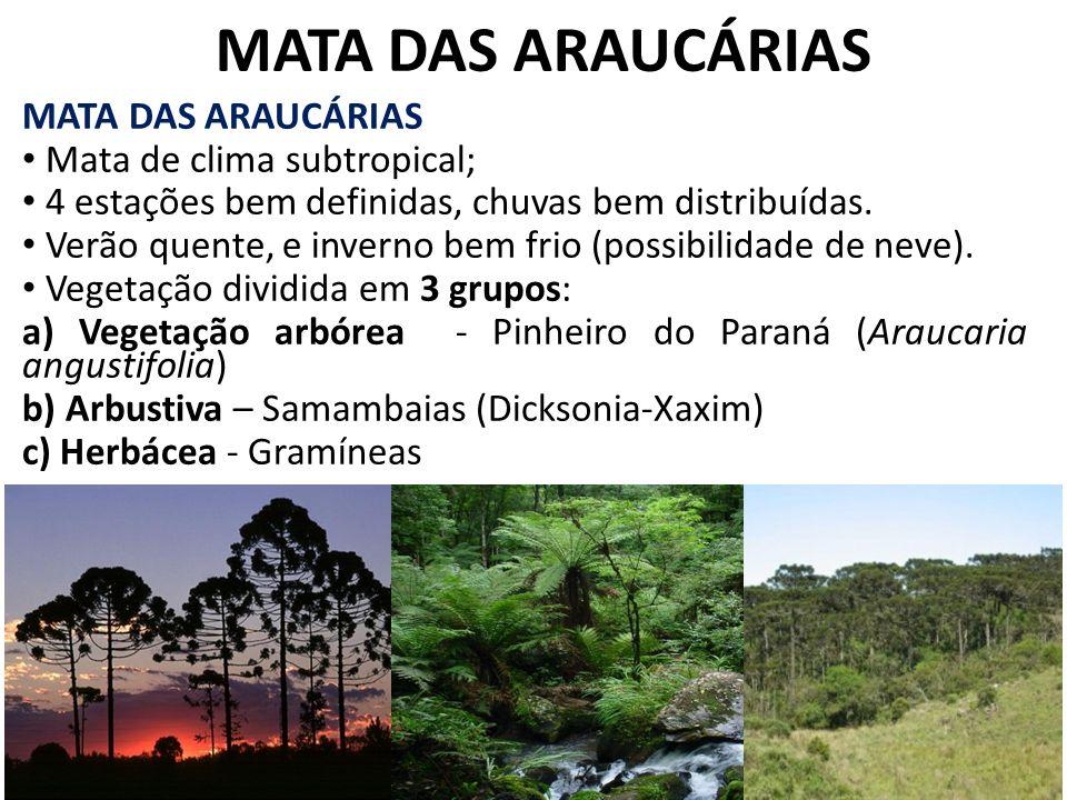 MATA DAS ARAUCÁRIAS Mata de clima subtropical; 4 estações bem definidas, chuvas bem distribuídas. Verão quente, e inverno bem frio (possibilidade de n