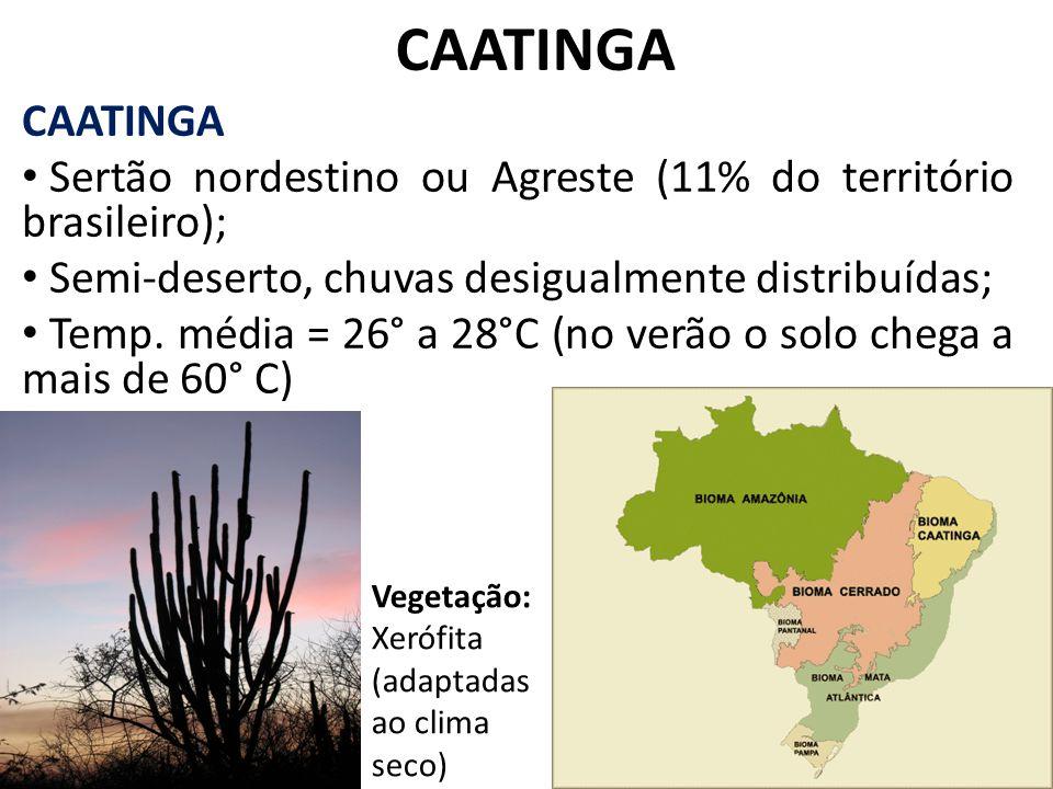 CAATINGA Sertão nordestino ou Agreste (11% do território brasileiro); Semi-deserto, chuvas desigualmente distribuídas; Temp. média = 26° a 28°C (no ve