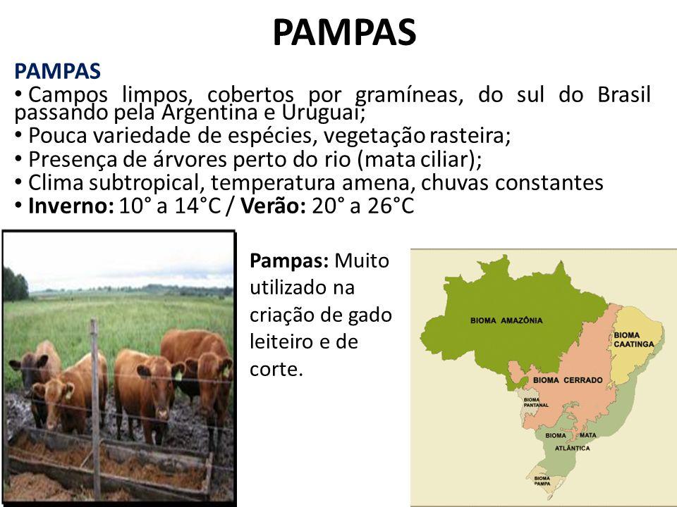 PAMPAS Campos limpos, cobertos por gramíneas, do sul do Brasil passando pela Argentina e Uruguai; Pouca variedade de espécies, vegetação rasteira; Pre